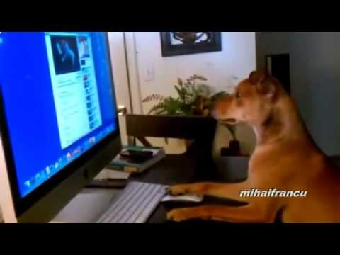 Funny Dogs Acting Like Humans