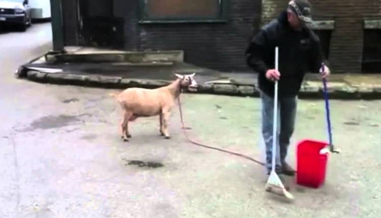 Jurassic Park Theme Tune Sung By Goats