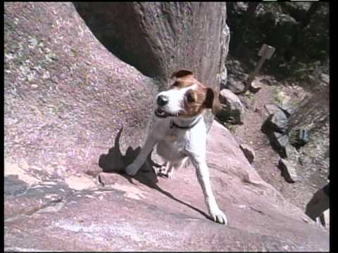 Meet Biscuit The Rock Climbing Dog