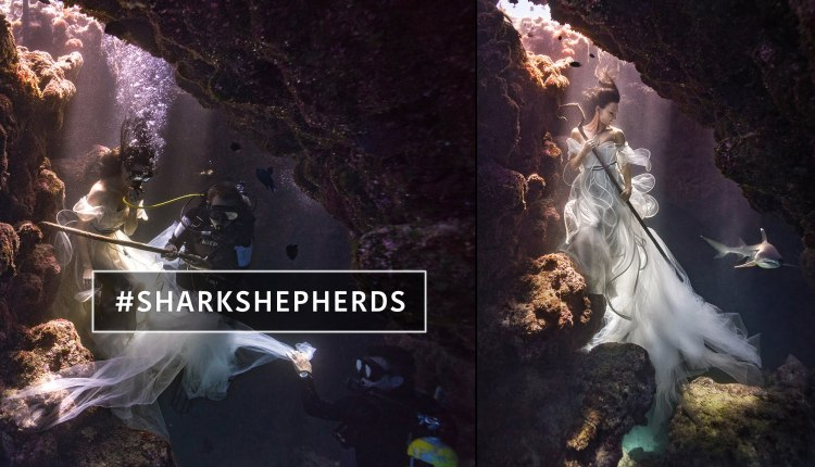 Model Tied Down With Sharks To Create Surreal Shark Shepherd Photoshoot