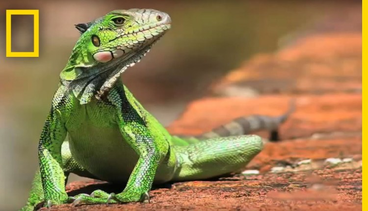 My Shot Minute Reptiles by Nat Geo