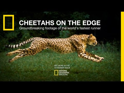The Cheetah's On The Edge