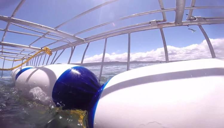 Two Adrenaline Junkies Get A Close Shark Encounter