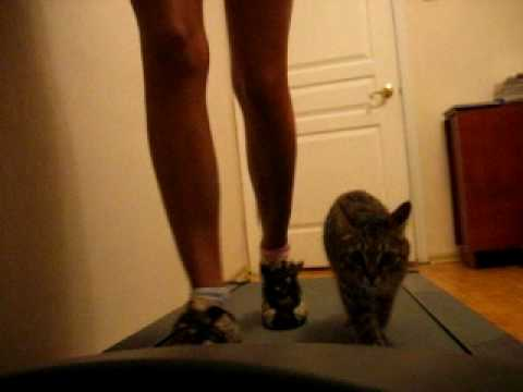 Cat Running With Owner On Treadmill