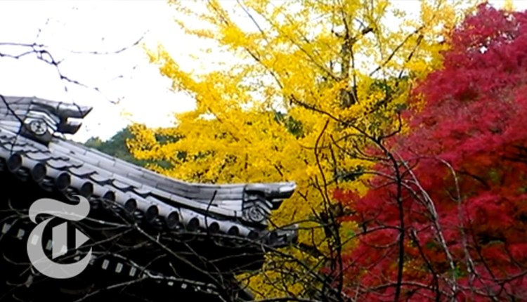 Frugal Traveler: Kyoto, Japan