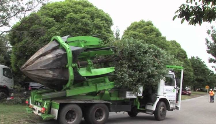 How To Move A Tree To Another Place