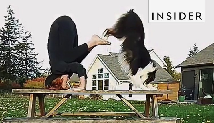 This Dog Does Yoga Better Than You