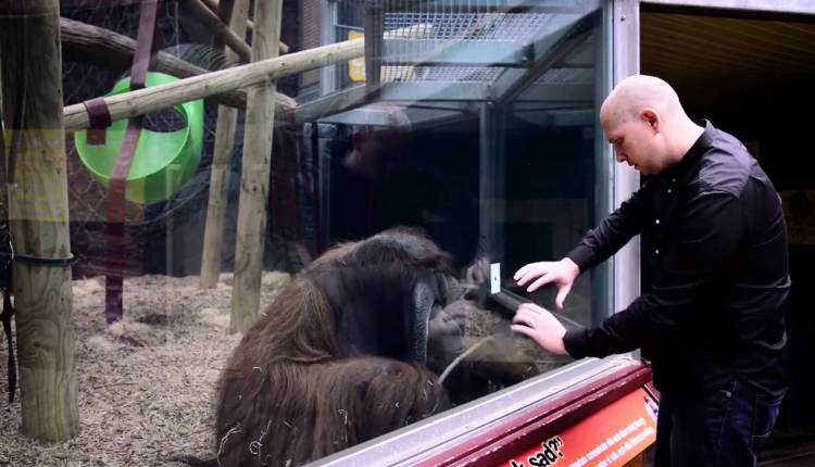 Guy Does An Amazing Magic Trick With Orangutan