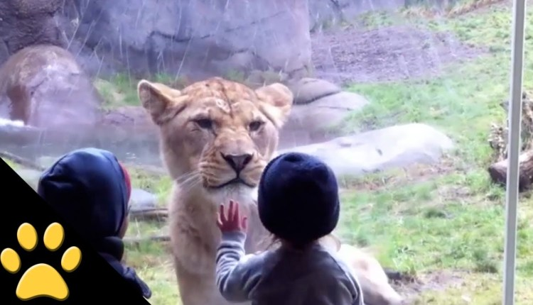 Funny Kids At The Zoo Compilation
