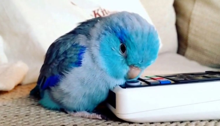 Meet The Cutest And Funniest Parrots Of The Year