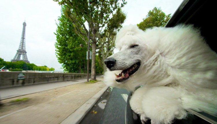 Why Do Dogs Put Their Heads Out Of Car Windows?