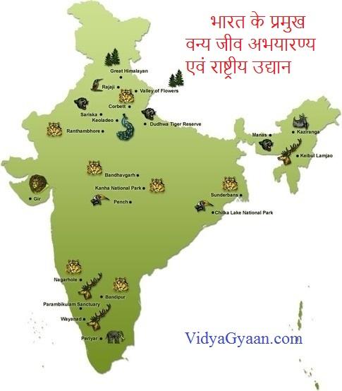 भारत के प्रमुख वन्य जीव अभयारण्य एवं राष्ट्रीय उद्यान