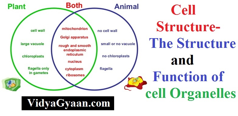 Cell Structure-Structure and Function of cell Organelles.