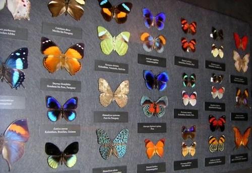 Naturhistorisches Museum