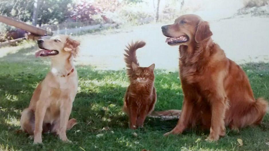 Foto zweier Hunde sitzend mit einer Katze in der Mitte