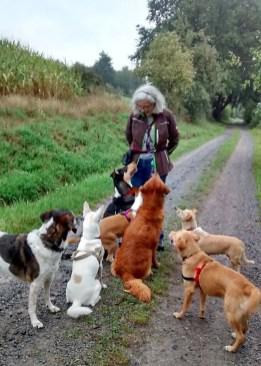 Foto Ulla mit sieben Hunden auf einem Waldweg