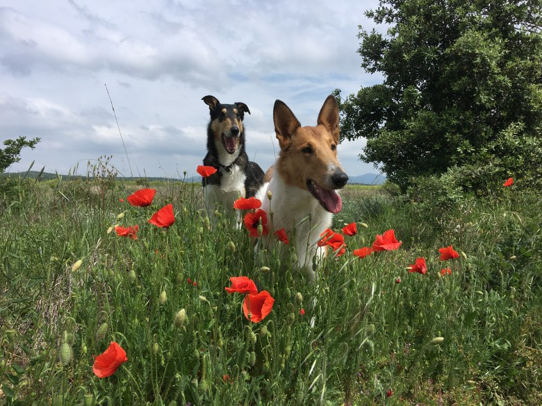 Trudy & Kalle en vacances
