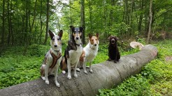 3 Collies & Lara