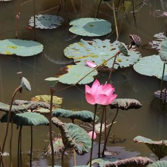 Lotus In Water Plant Diagram Chevy Silverado Wiring Diagrams Hoa Sen The Vietnamese Art Landscape Is Often Built According To An Ancient Immutable Cổ Diển This One Determines Elements Particular