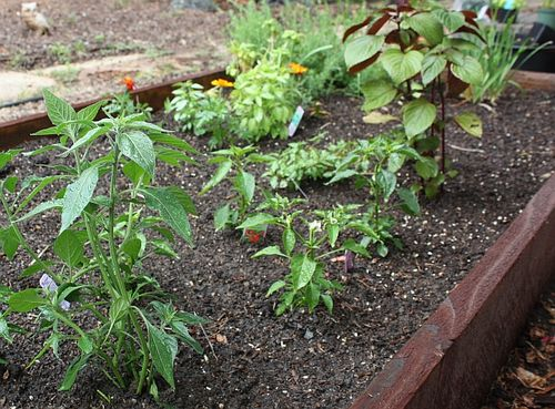 Finding Asian Herbs and Vegetables for Your Garden  Viet World Kitchen