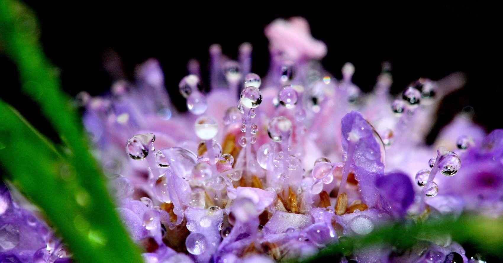 water drops on flowers