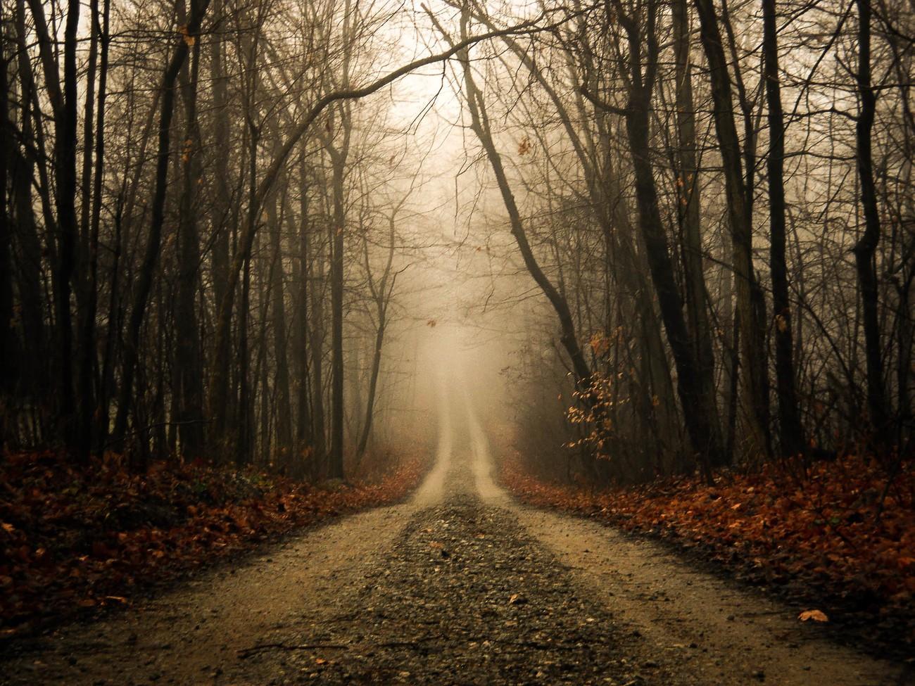 Foggy Fall Wallpaper 300 Empty Roads Photo Contest Winners Blog Viewbug Com