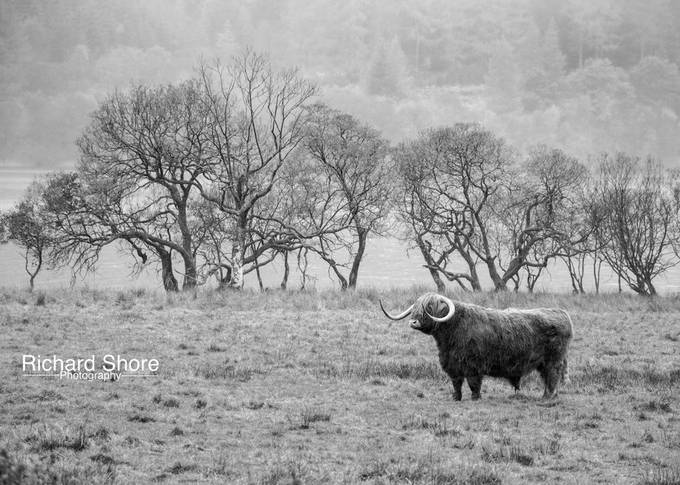 Grazing in the rain by RichardShore - Celebrating Nature Photo Contest Vol 5
