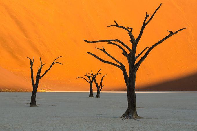 Skeleton Trees by njarehart - Orange Tones Photo Contest