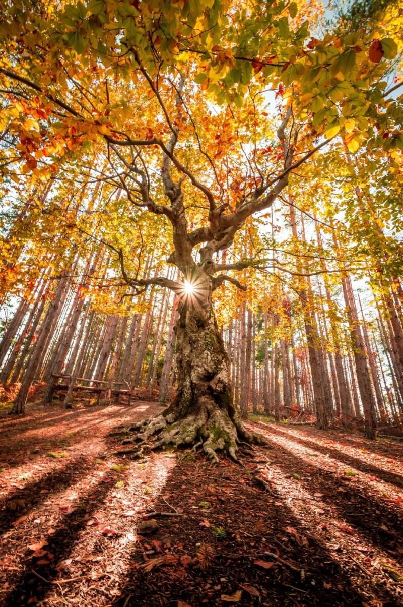 Golden autumn by jmadjarova - The Wonders of the World Photo Contest