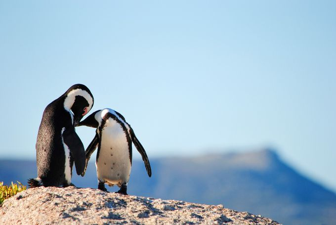 Love by Hedde - The Wonders of the World Photo Contest