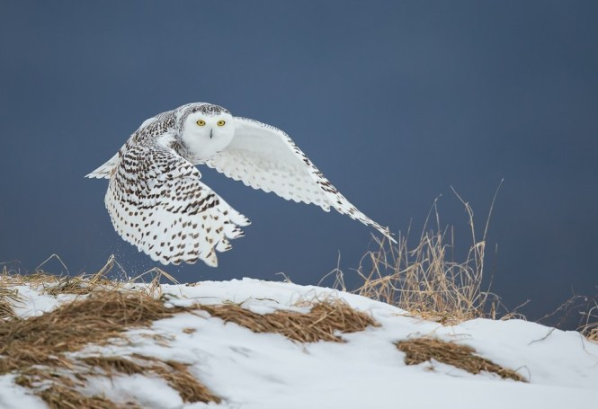Runcam Swift Owlplus Eagle Night Vision Comparison 1