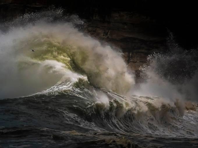 Rage by joe_menggolo - Celebrating Nature Photo Contest Vol 5