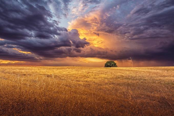 Lonely by AntonioBernardino - Celebrating Nature Photo Contest Vol 5