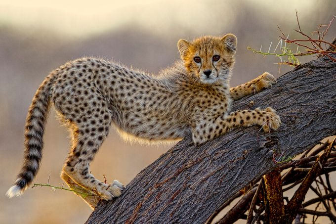 Playtime by charlielynam - The Wonders of the World Photo Contest