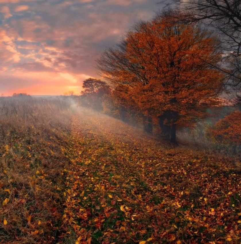 Autumn Lane (Nevada 2007) by DAVIDBLAKLEYPHOTOGRAPHY - Celebrating Nature Photo Contest Vol 5
