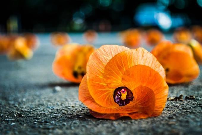 Orange is the new orange by Stevenhendricksphotog - Orange Tones Photo Contest