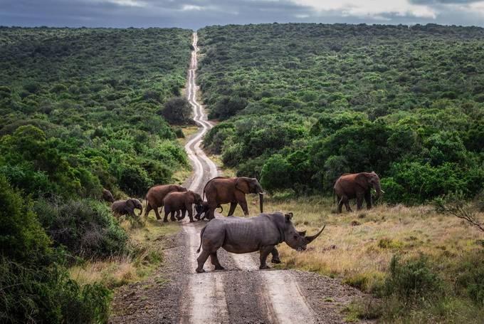 Neushoorn & quot; Crashen & quot; een olifantenfeest! van WorldPix - Fotowedstrijd met unieke locaties