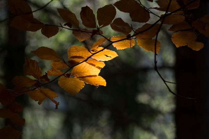 Autumn light by cameliasopon - Orange Tones Photo Contest