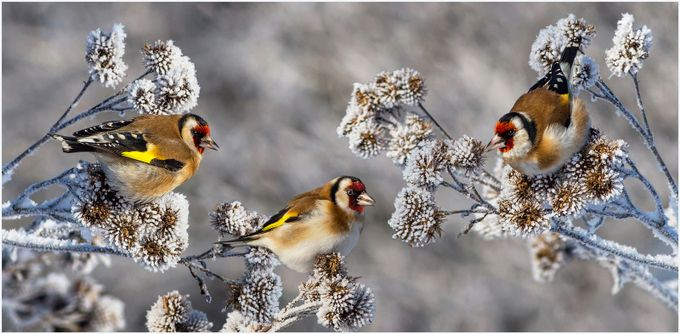 Cold winter by p_vaida - Celebrating Nature Photo Contest Vol 5