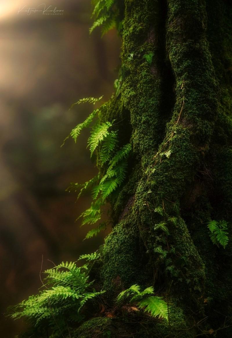 Shy by Katjusa_Karlovini - The Wonders of the World Photo Contest