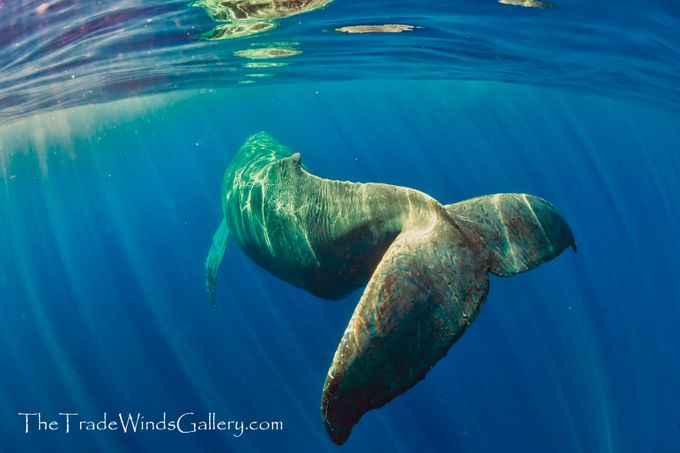 RW8_3249-2--small by thetradewindsgallery - The Wonders of the World Photo Contest
