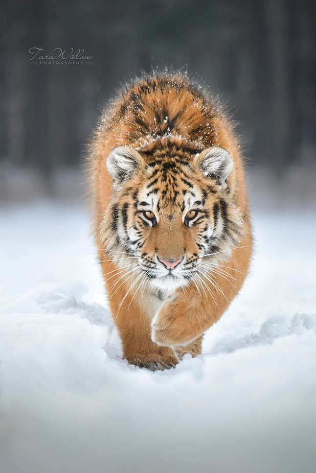 Snow prince by TaraWillow - The Wonders of the World Photo Contest