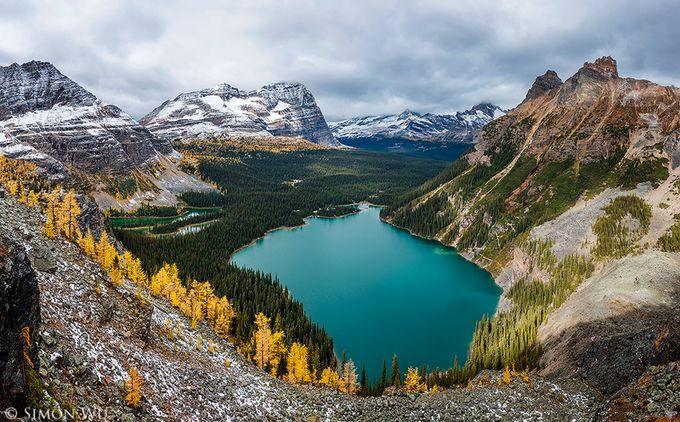 Golden Larches by simonwu - Canada Photo Contest