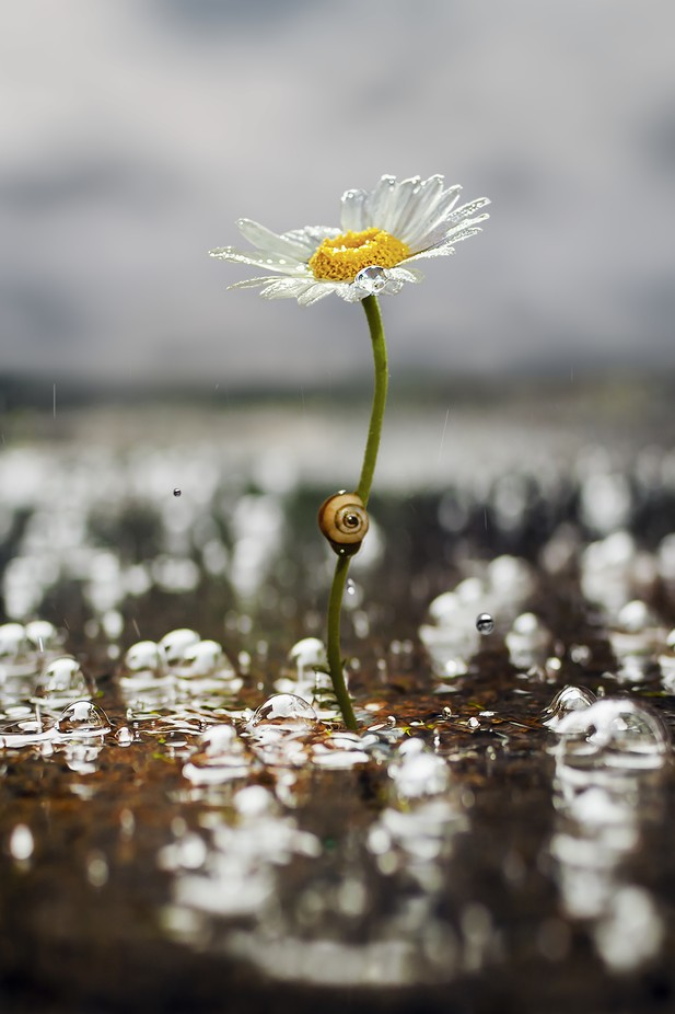 After Rain by StavruDaniel - The Wonders of the World Photo Contest