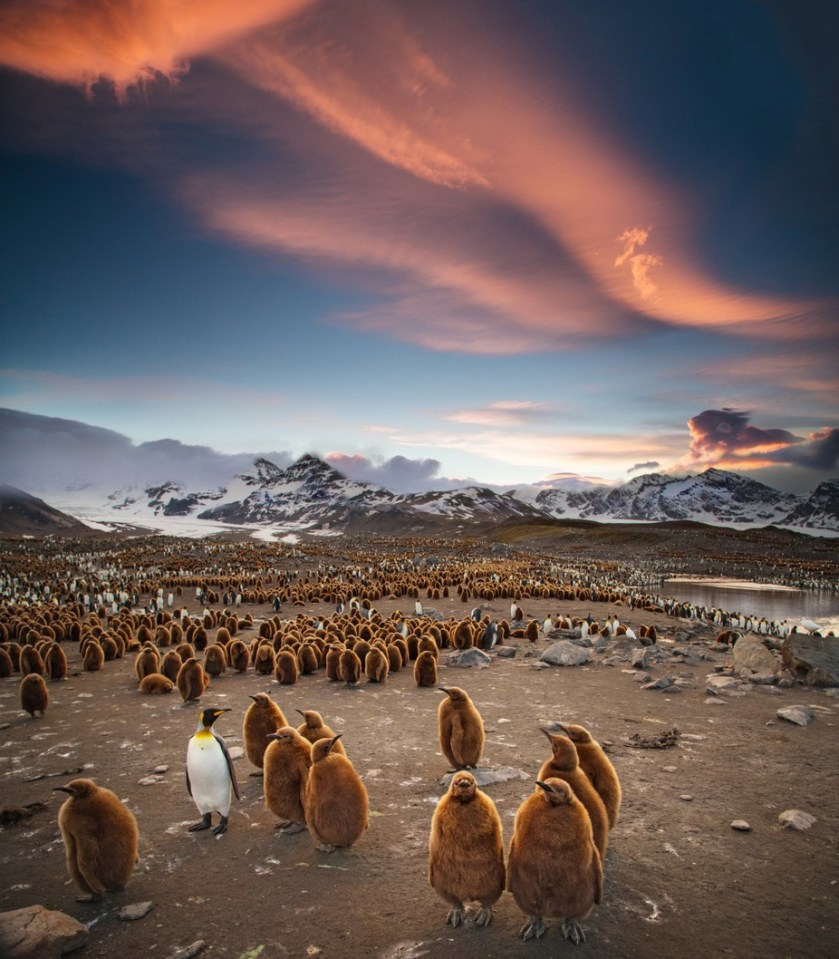 Lot of life by matthiasjlt - The Wonders of the World Photo Contest