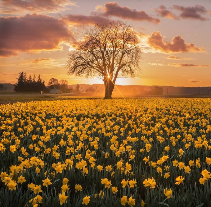 Golden Hour by maraleite - The Wonders of the World Photo Contest