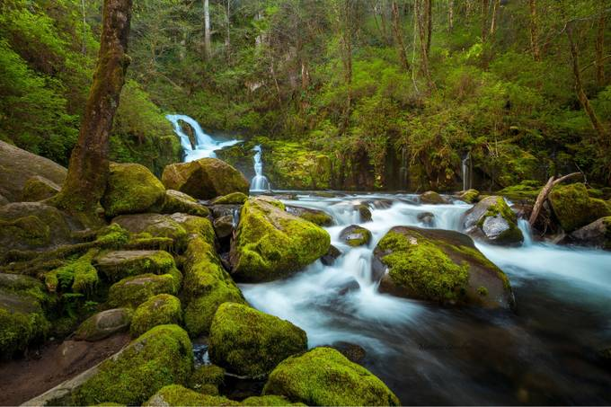 Sweet Creek Falls Oregon by Mspradlin - Celebrating Nature Photo Contest Vol 5