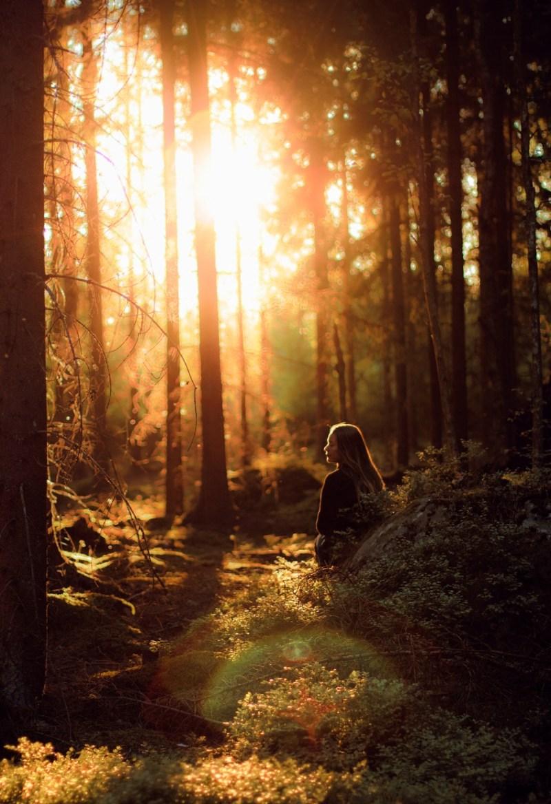 Forest light by Signefotar - Orange Tones Photo Contest