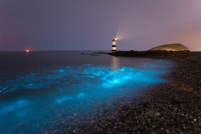 Bioluminescence - July 13th 2018' by kriswilliams - The Blue Color Photo Contest 2018