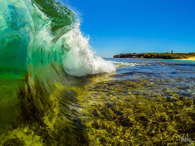 Green n Gold by olliewhitham - Celebrating Nature Photo Contest Vol 5